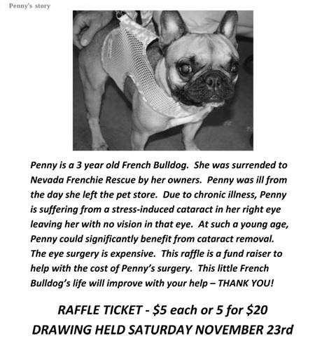 Pennys_Story_Nevada_Frenchie_Rescue